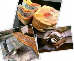 ROODEPORT, SILVERTON, KZN ^^+27672335783 MAAMA SARAH IS MOST POWERFUL TRADITIONAL HEALER AND SANGOMA IN SOUTH AFRICA